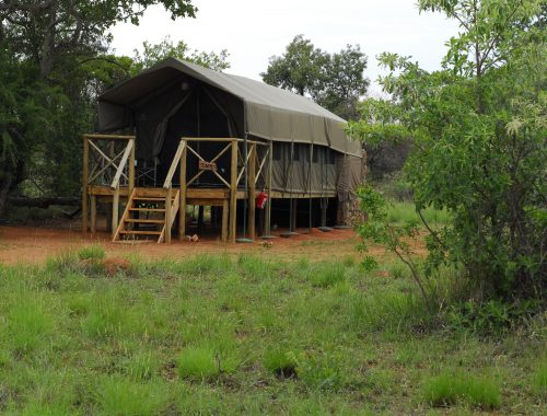 Kwafubesi Tented Safari Camp, Mabula